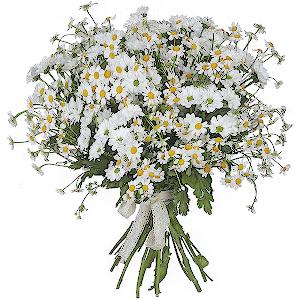 Доставка цветов нижний новгород ромашки подарок на день рождения обеспеченному мужчине