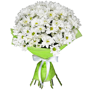 Хризантема кустовая (7 шт.)
